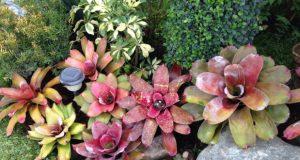 Como Usar Bicarbonato de Sódio em Jardins